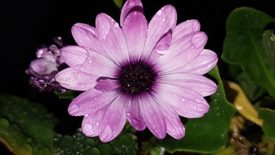 Pink flower with raindrops