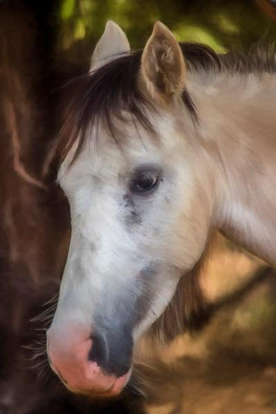 Salt River Horse