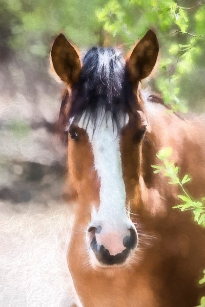 Salt River Horses--2