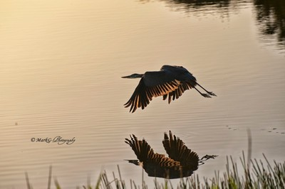 Sunrise Hunt