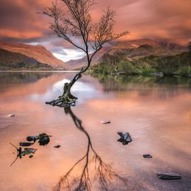 Lone Tree on Llyn Padarn, Llanberis, UK