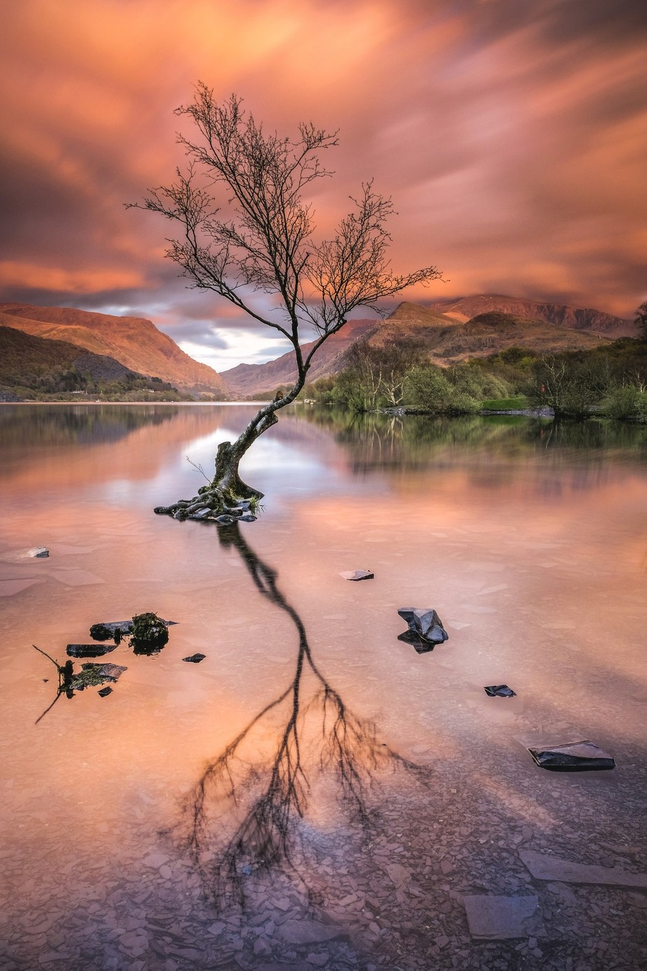 Lone Tree on Llyn Padarn by Vemsteroo - Monthly Pro Vol 27 Photo Contest