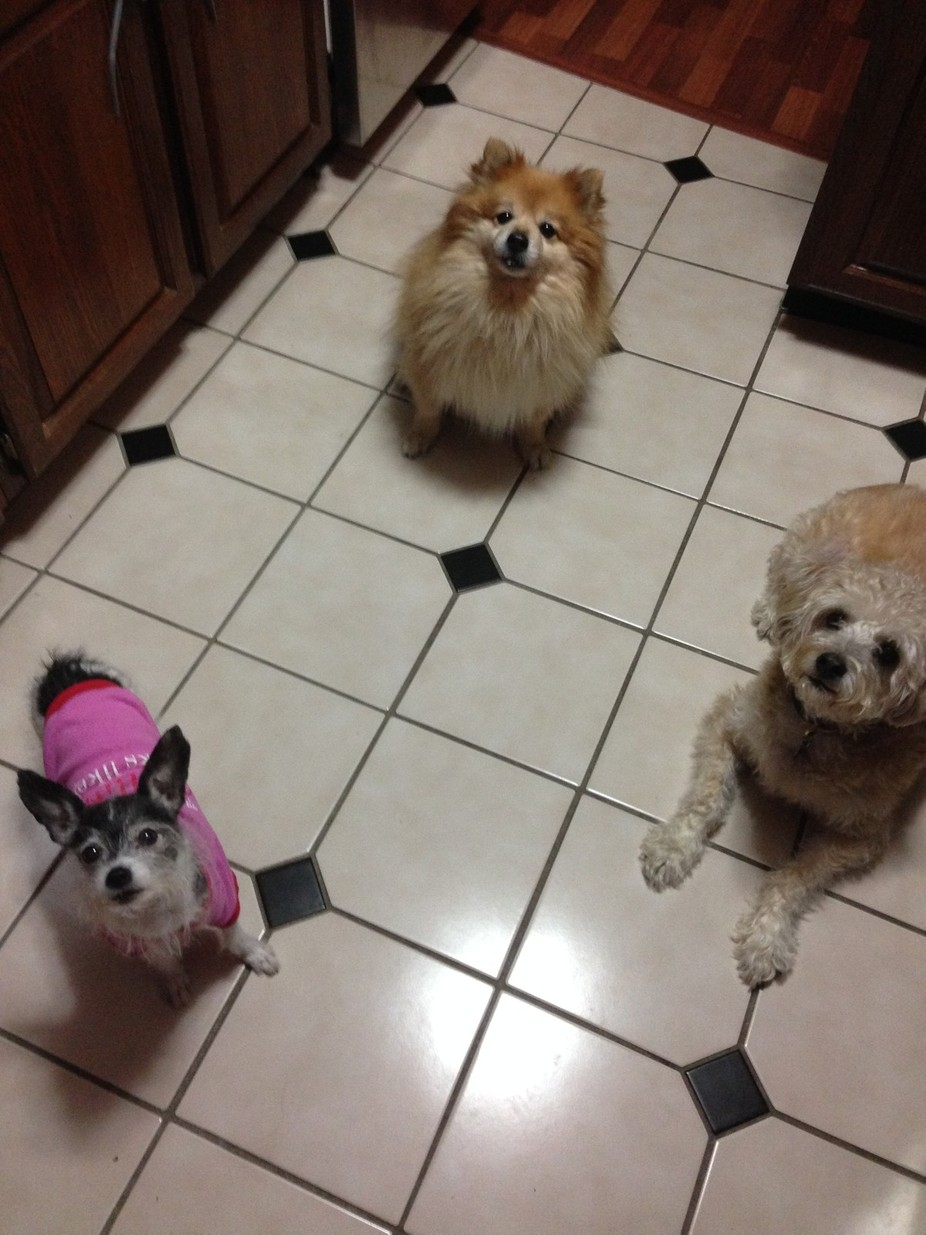 Emma (in pink), Lucy (on the right) and Uturn (in the back) are the best of buddies...while they ...