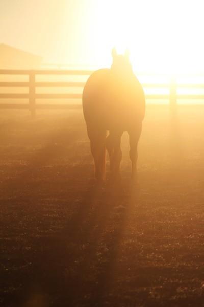 Sunrise Patriot