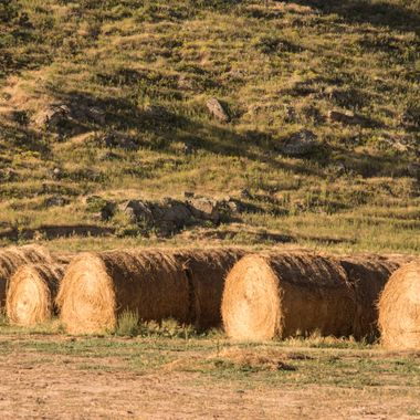 Tons of Hay