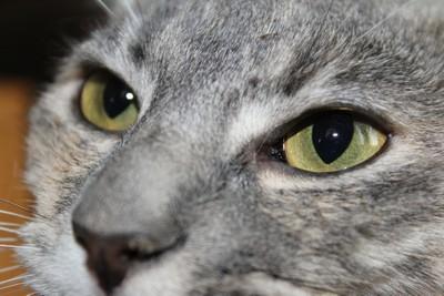 Seeing Through Lea's eyes
