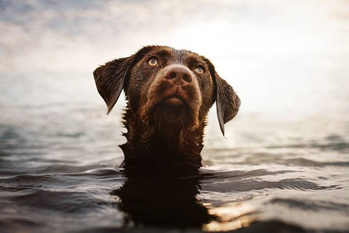 waterlover Lotta by stadthunde-erfurt - Animals And Water Photo Contest