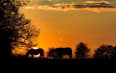 Sunset over Bufton