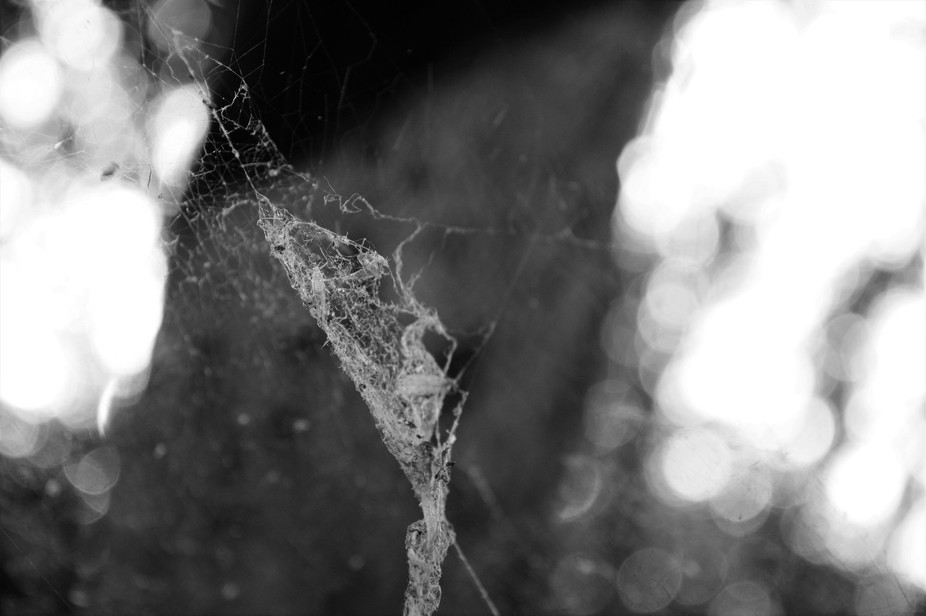 An old web