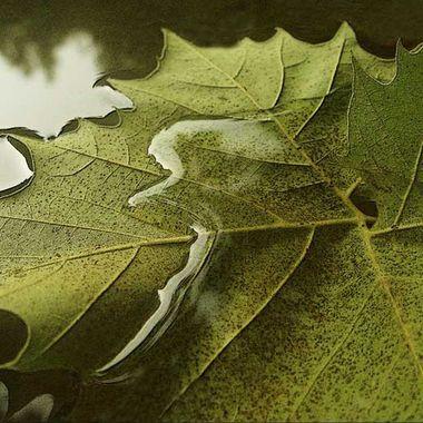 Leaf_031a