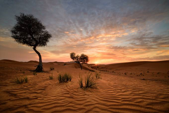 Desert Sunset by smrezaulhaque - Silhouettes Of Trees Photo Contest