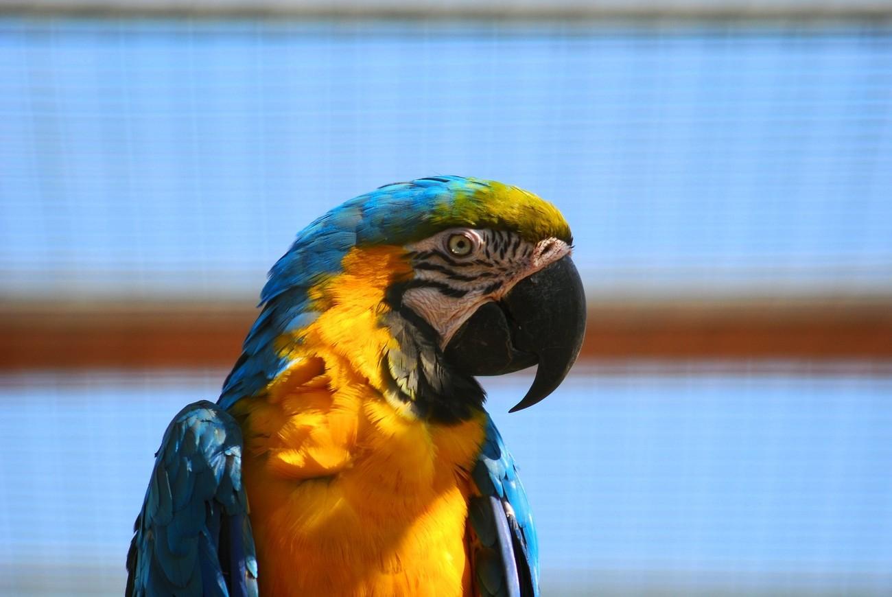 taken at the parrot zoo near boston uk
