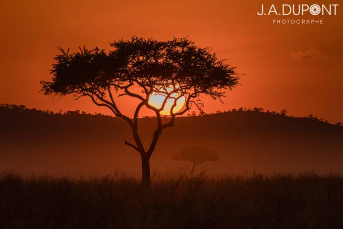 Paradise Sunset by JADUPONT - A Lonely Tree Photo Contest