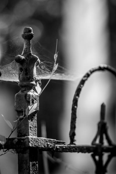 graveyard spider web