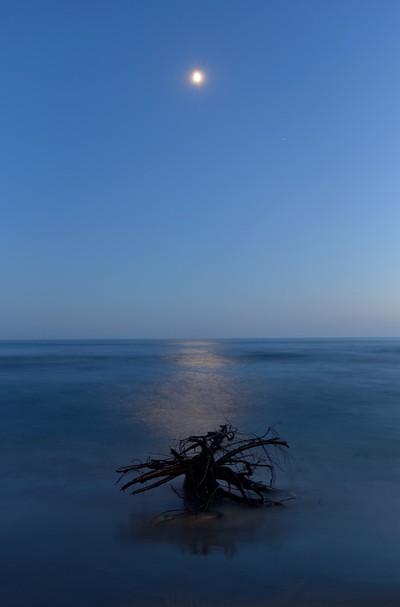 Moonlight over Driftwood.