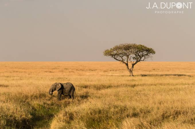 Elephantscape by JADUPONT - Rule Of Thirds Photo Contest v4