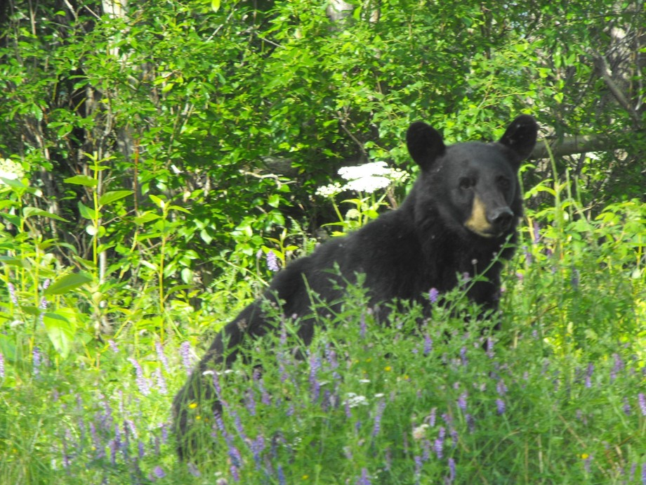 On my Bday in Alaska where I use to live I got to see this guy up close