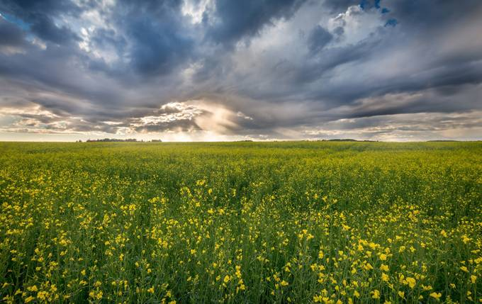 Flower Power  by peterfoldiak - Rural Vistas Photo Contest