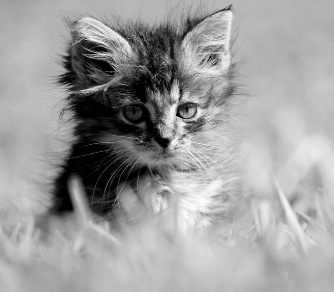 The stare by birdie2016 - Kittens vs Puppies Photo Contest
