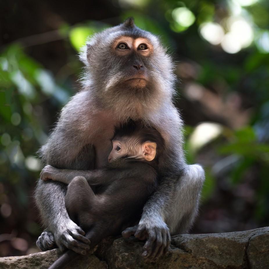 Sacred Monkey Forest Sanctuary, Ubud, Indonesia 2 by larrymarshall - Happening At The Zoo Photo Contest