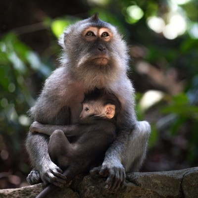 Sacred Monkey Forest Sanctuary, Ubud, Indonesia 2
