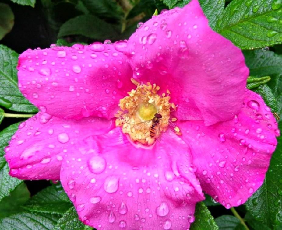 Pink flower in rain