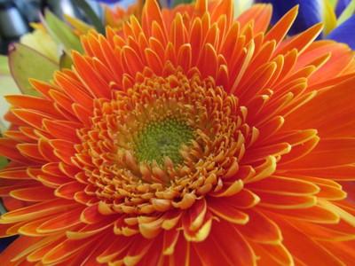 Orange Splendour