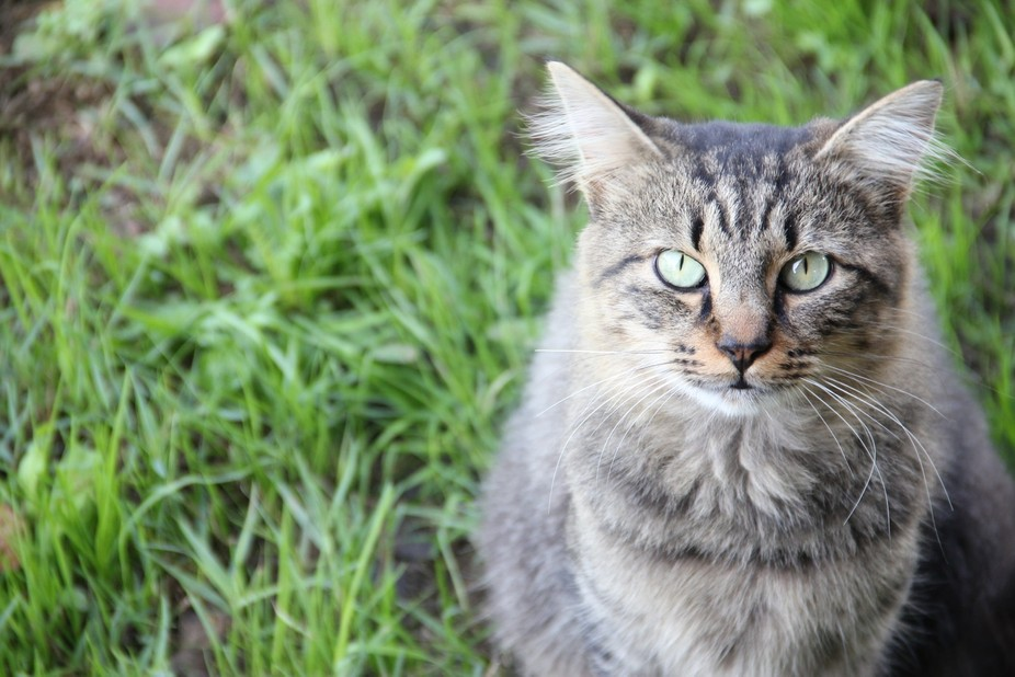 This is my cat caught in all his elegance, with two intense eyes looking right through the lens. ...