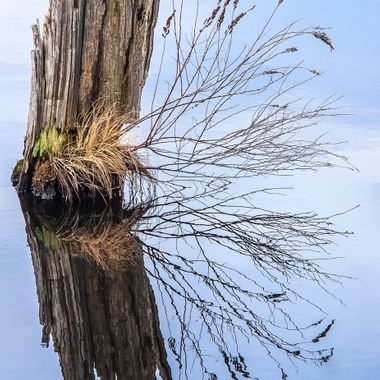 A decaying stump in still water.