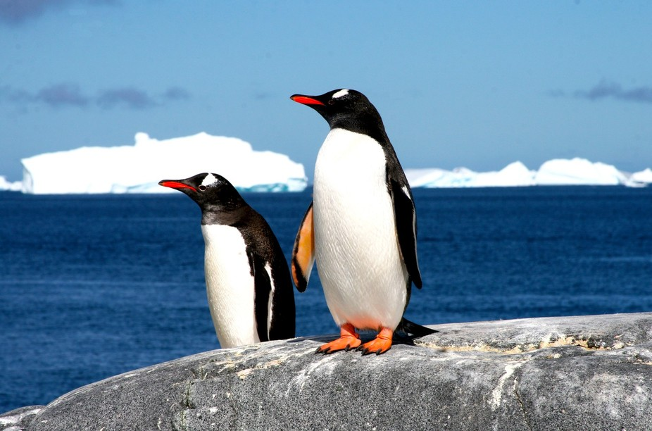 National Geographic/Linblad cruise to Antarctica