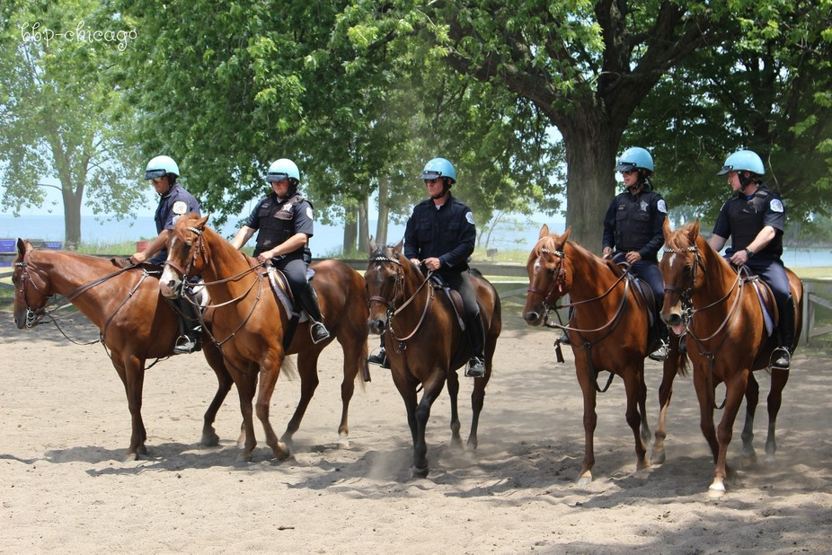 Chicago Mounted Police-2