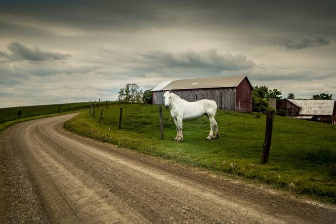 Workhorse by SproutedAcornPhotography - Farms And Barns Animals Photo Contest