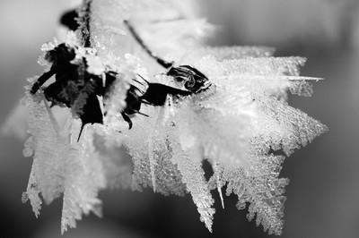Winter's Media