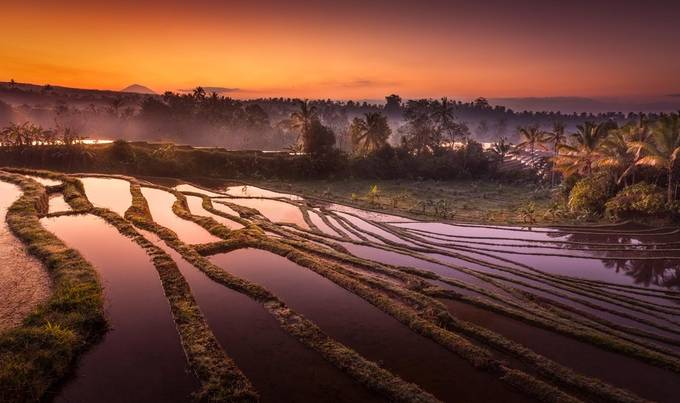 Bali Rice Terrace Dawn by Merakiphotographer
