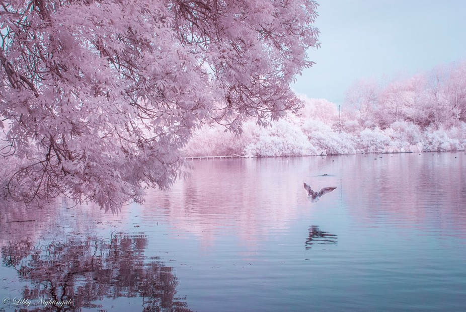 Infrared photo taken on a converted Nikon D80