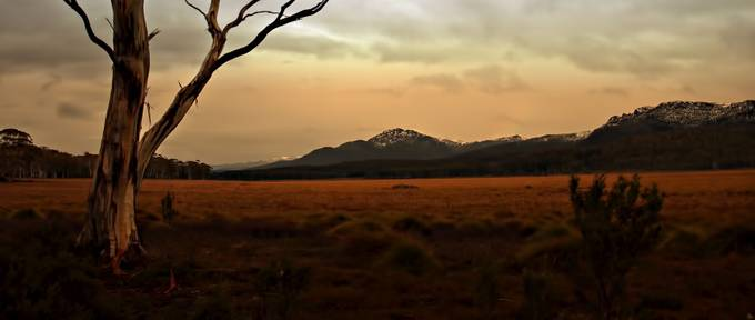 Winter morning and the button grass plains lies like a velvet carpet on this ancient land. Tasmania.