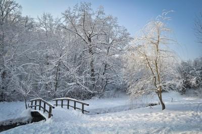 Winter in my park