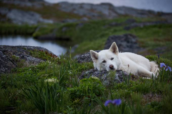 Dog on rock by ChrisG - Animals And Rule Of Thirds Photo Contest