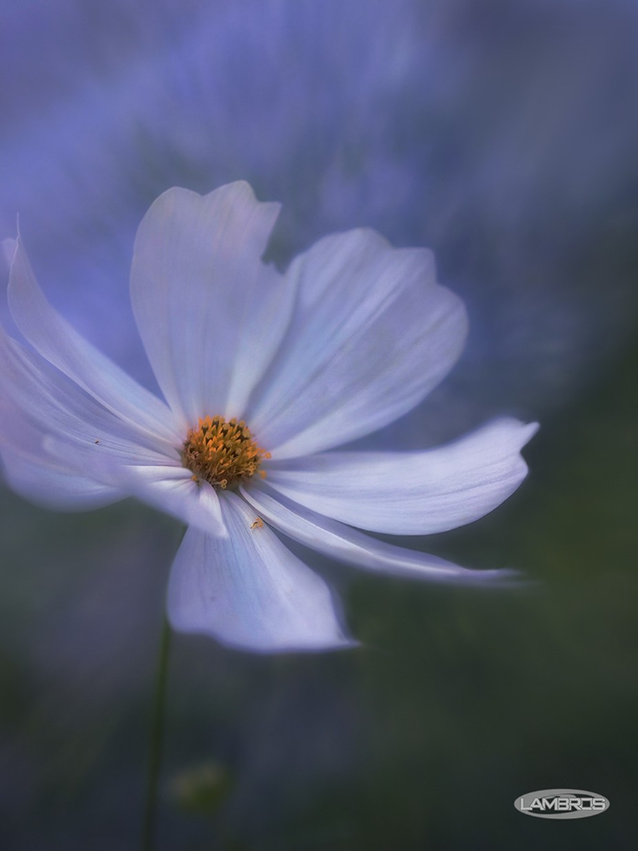 Arabesque by PRL_NaturesMystique - Soft Photo Contest
