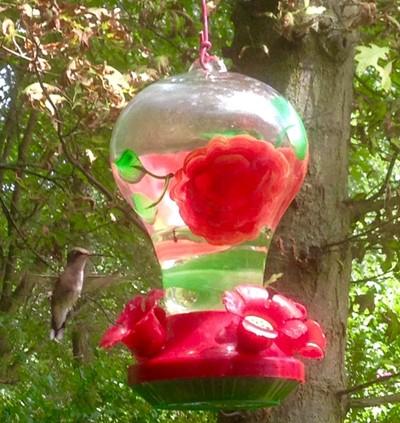 Hummingbird Fun