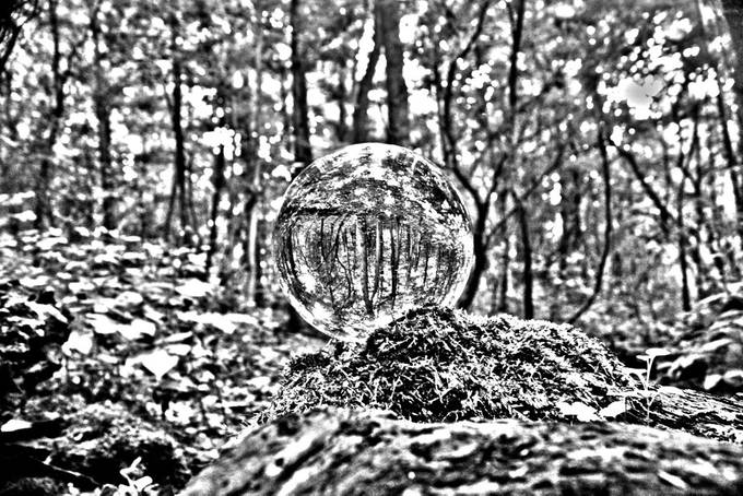 Decided to experiment with a little black and white in the forest, made for a good shot.