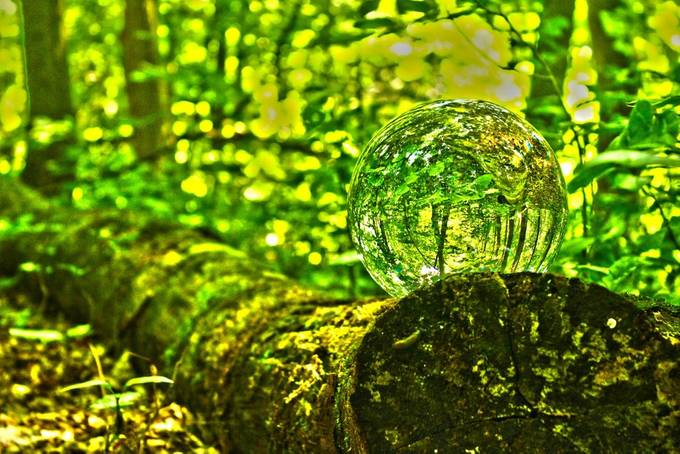 I love this picture how the tree trunk slowly fades into the background and how you can see it flipped in the crystals perspective.