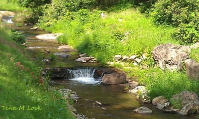 Beautiful Stream
