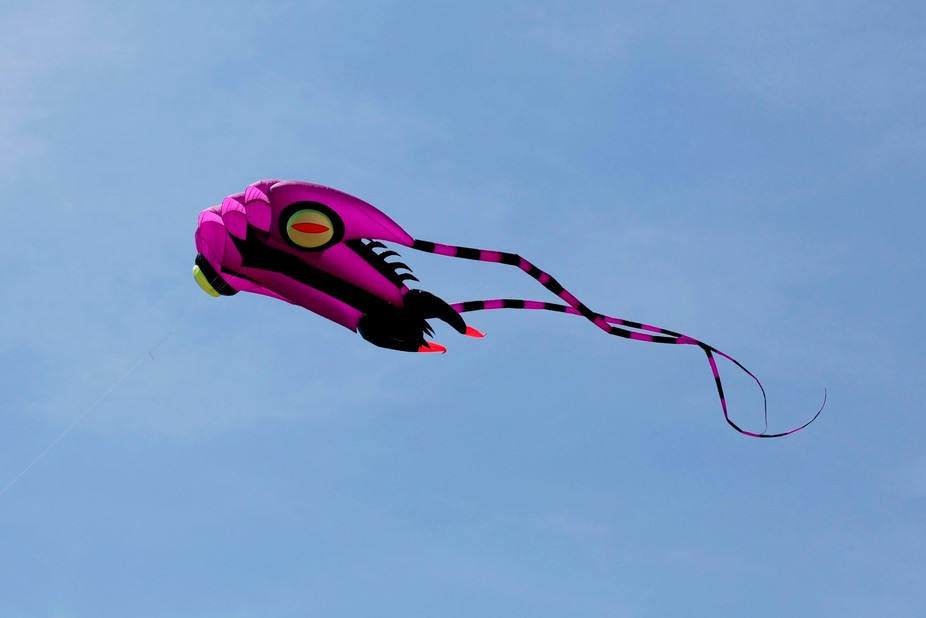 Kite(many home made)