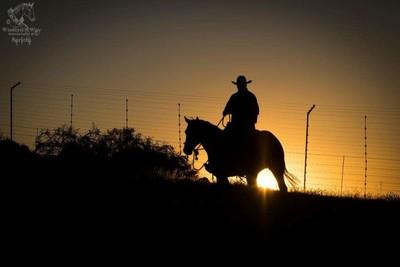 Dunit Stud Sunset