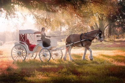fall carriage ride