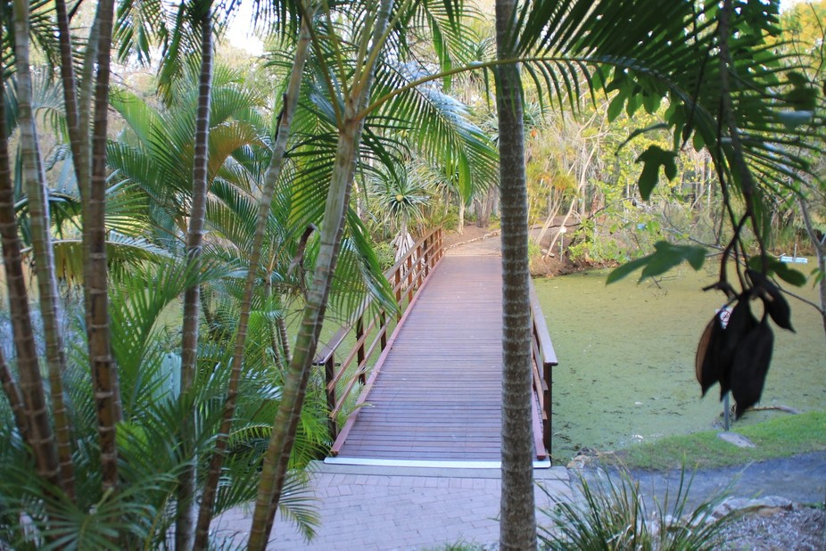 A wooden bridge in the botanic gardens in Hervey Bay winds through the beautiful gardens and natu...