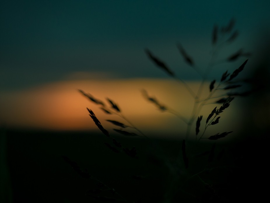 This shot was taken on the side of a highway. Kansas is very well known for our grasses, and I ha...