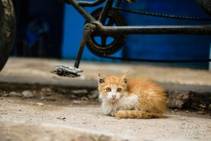 Poverty by alextemina - Cute Kittens Photo Contest