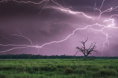 Dead Tree Storm
